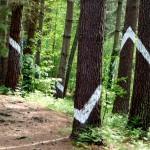 El Bosque de Oma, el bosque pintado de Ibarrola